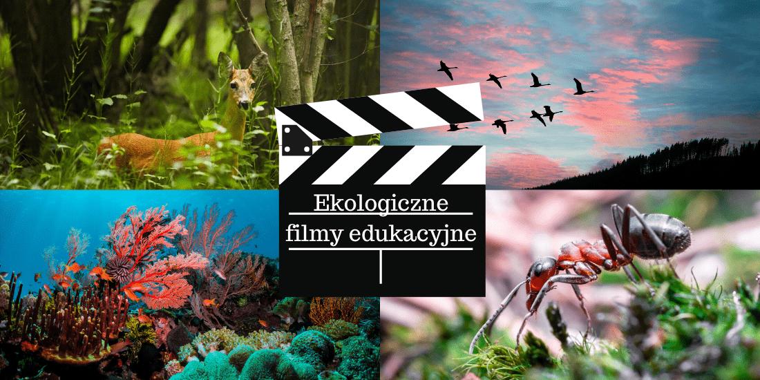 ekologiczne filmy edukacyjne